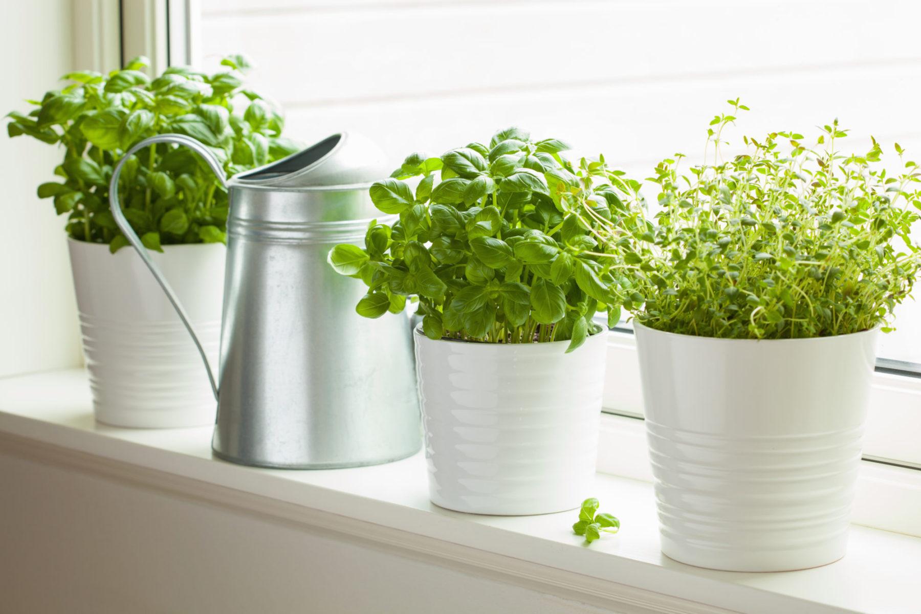 Bylinky v kuchyni pro útulný domov