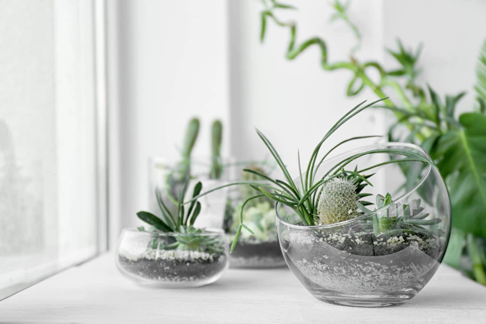 Rostliny v průhledné nádobě